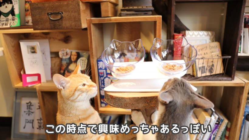 ピュリナワン グレインフリー 白身魚に興味津々な猫たち