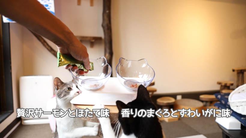 シーバDUO 贅沢シーフード味セレクションのサーモン・ほたて味とまぐろ・ズワイガニ味