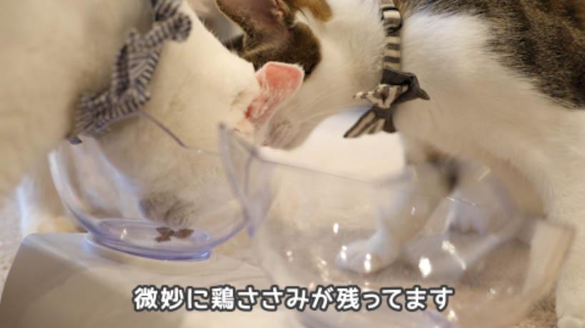 シーバDUO香りのまぐろ味セレクションのささみは不人気
