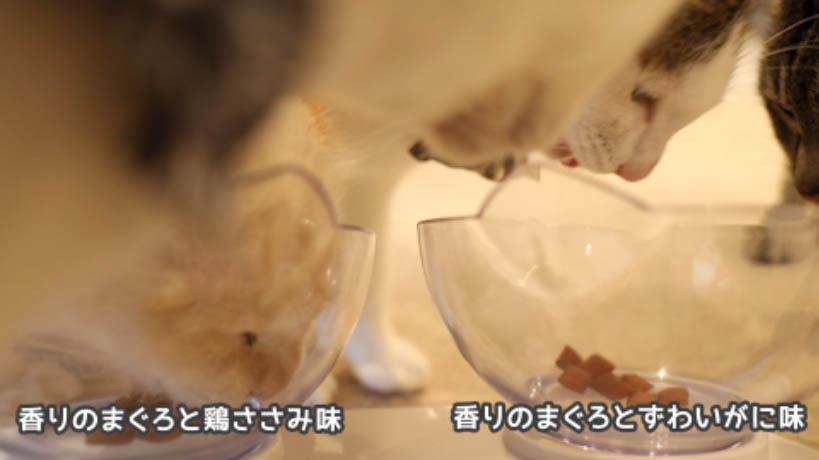 シーバDUO香りのまぐろ味セレクションのまぐろ・ささみ味とまぐろ・ずわいがに味の食べ比べ