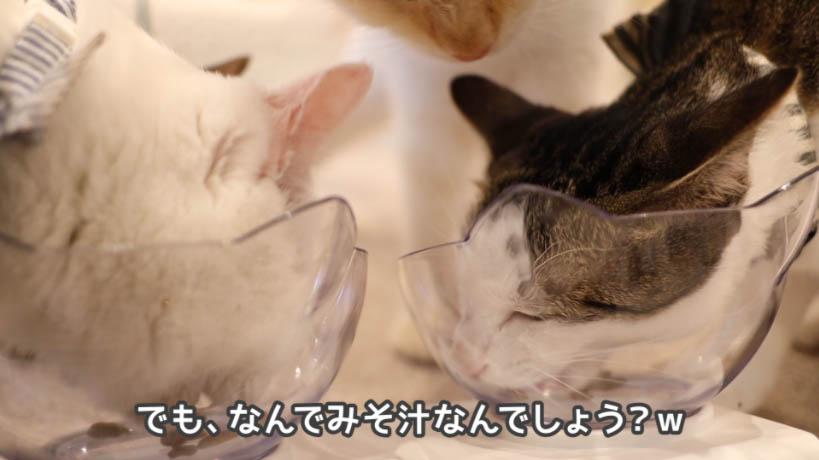 和の究み鰹だし香るみそ汁風味はなぜみそ汁味なのか