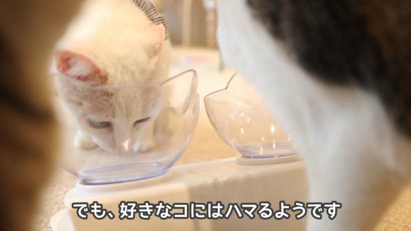 銀のスプーン三ツ星グルメお魚レシピにハマる猫