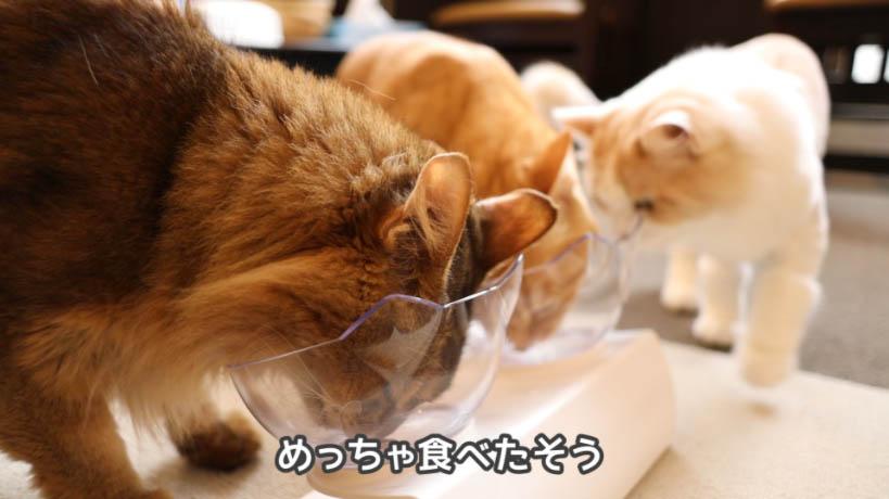 ほかの猫たちもモンプチ クリスピーキッス贅沢バラエティパックを食べたそうにしている様子