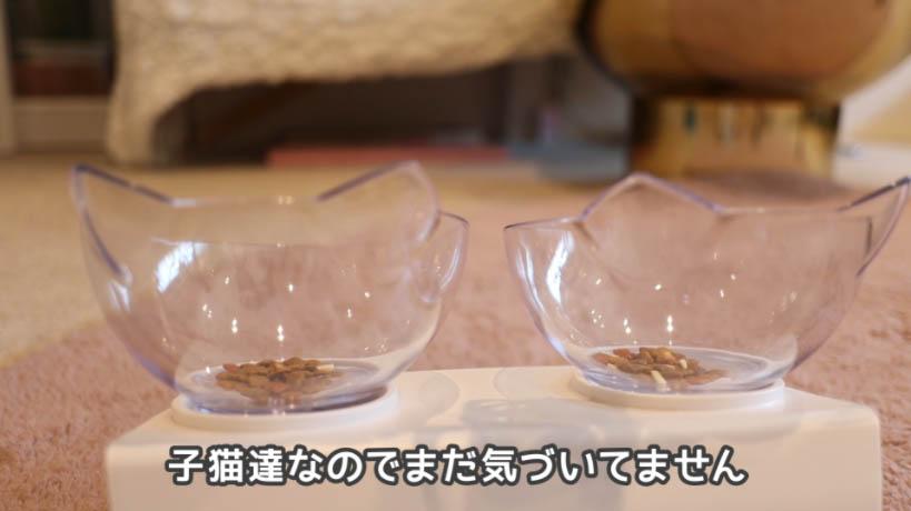 COMBO子ねこ用ミルクチップ添えをお皿に入れても猫たちは気づかない