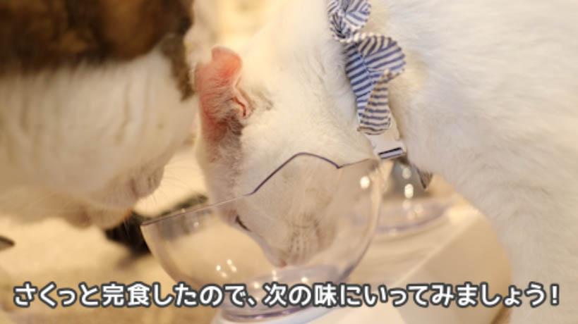 シーバDUO香りのまぐろ味セレクションを完食