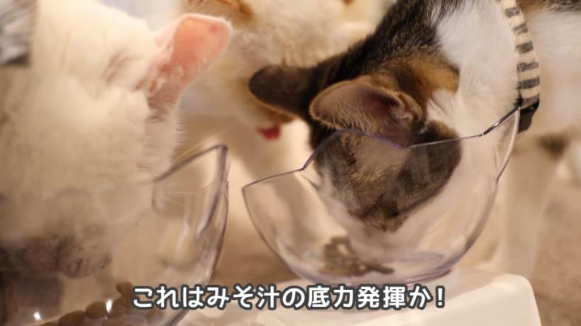 和の究み鰹だし香るみそ汁風味は猫にも好評なのかも