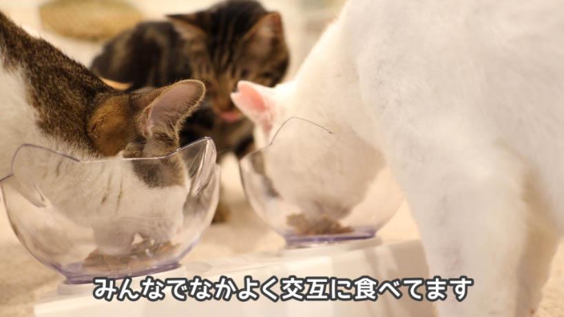 モンプチナチュラル新鮮若鶏の贅沢を仲良く交互に食べる猫たち
