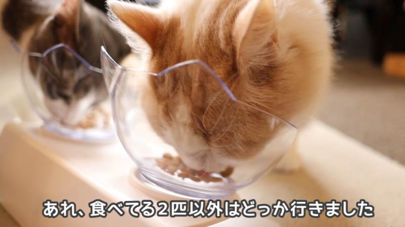 ご飯を食べてる2匹の猫以外はキャットフードに興味なし