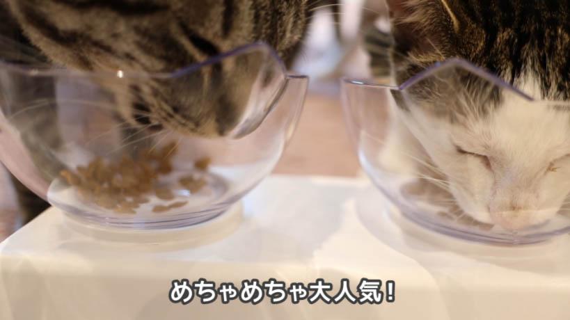 miawmiaw(ミャウミャウ)まぐろ味は猫たちに人気