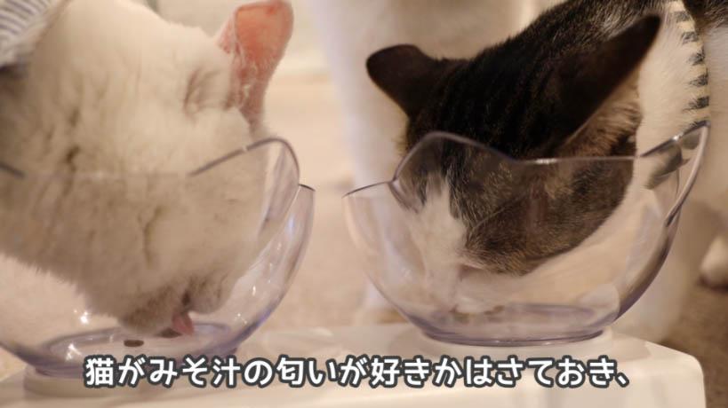 和の究み鰹だし香るみそ汁風味は猫が好きな匂いかは不明