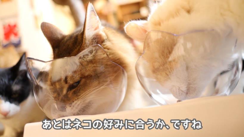 ロイヤルカナン アロマエクシジェントが猫の好みにあえば良い