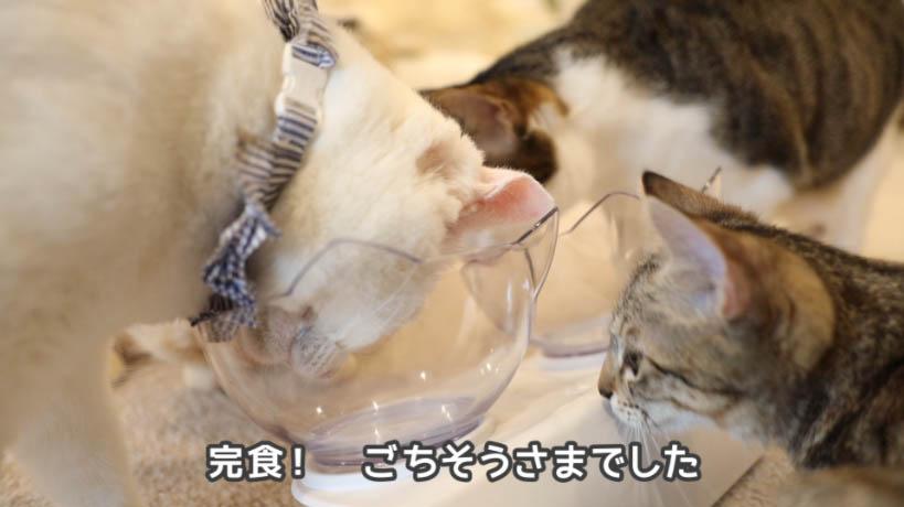 シーバDUO香りのまぐろと味わい鶏ささみ味を食べ終えた猫たち