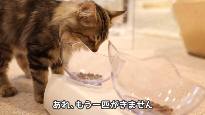 モンプチ子猫用5種のブレンドを食べにきたのは1匹だけ