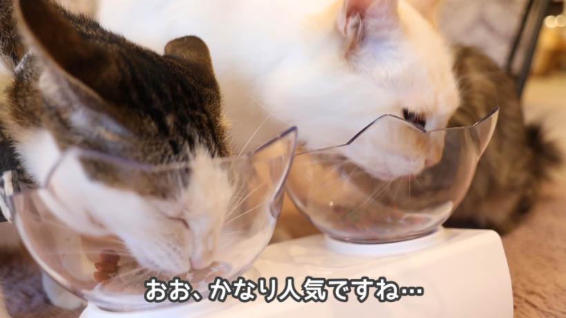 モンプチ毛玉ケア 5種のブレンドは猫たちに好評だった