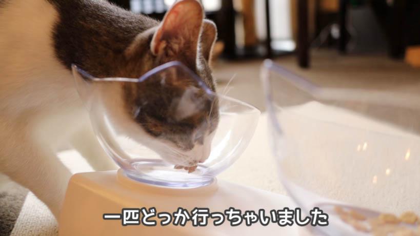 ピュリナワン グレインフリー 白身魚を途中で食べるのやめた猫