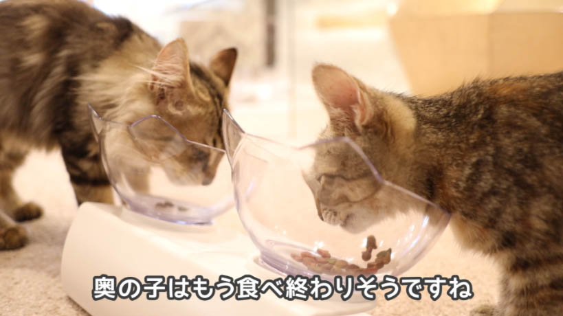モンプチ子猫用5種のブレンドを1匹が食べ終わりそう