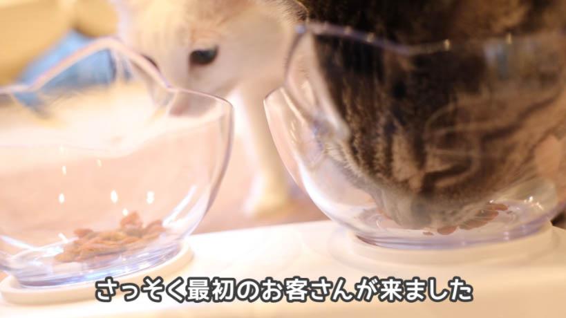 モンプチ 7種のブレンド かつお節入りを食べようとする猫たち