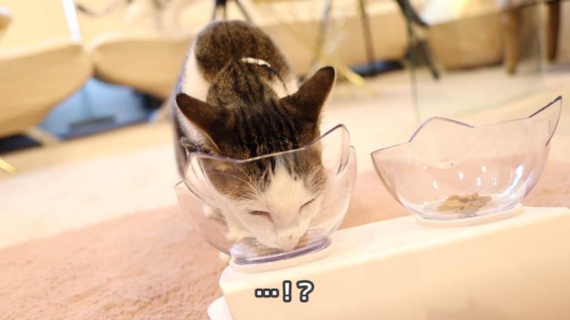 モンプチ クリスピーキッス シーフードは猫に人気なし