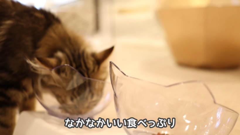 モンプチ子猫用5種のブレンドを2ヶ月と3ヶ月の子ネコに食べてもらう