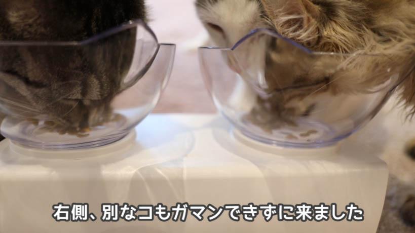 miawmiaw(ミャウミャウ)まぐろ味はいろんな猫たちにいい感じ