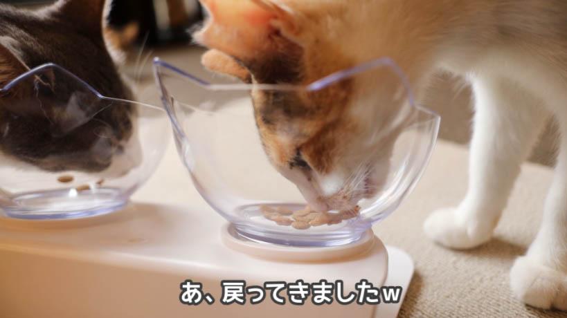 ピュリナワン グレインフリー 白身魚を食べに戻ってきた猫