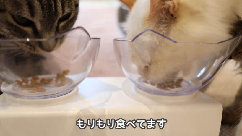 もりもりとmiawmiaw(ミャウミャウ)まぐろ味を食べる猫たち