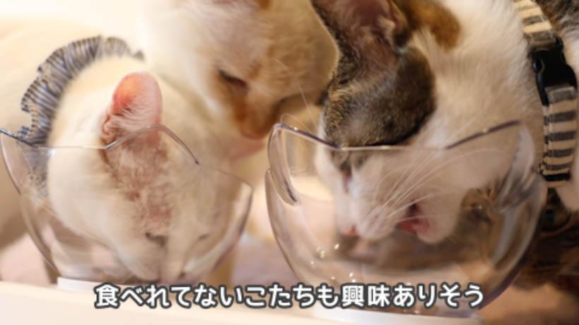 モンプチナチュラル白身魚とチキンの贅沢を食べれてない猫も興味津津