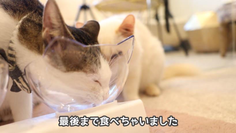 モンプチ クリスピーキッス シーフードは1匹の猫が最後まで食べた