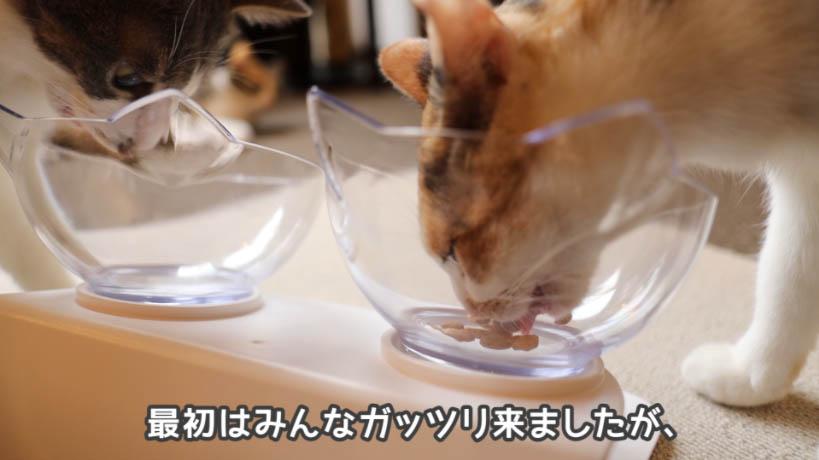 ピュリナワン グレインフリー 白身魚を完食した奥の猫