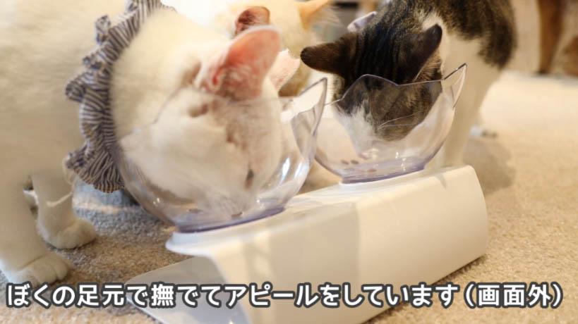 銀のスプーン三ツ星グルメお魚レシピを食べる猫と、僕の足元で遊ぶ猫