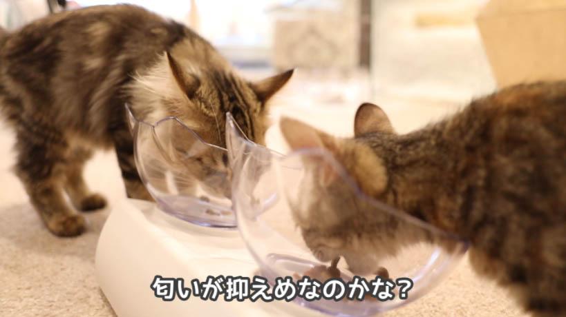 モンプチ子猫用5種のブレンドは匂いが少ない感じ