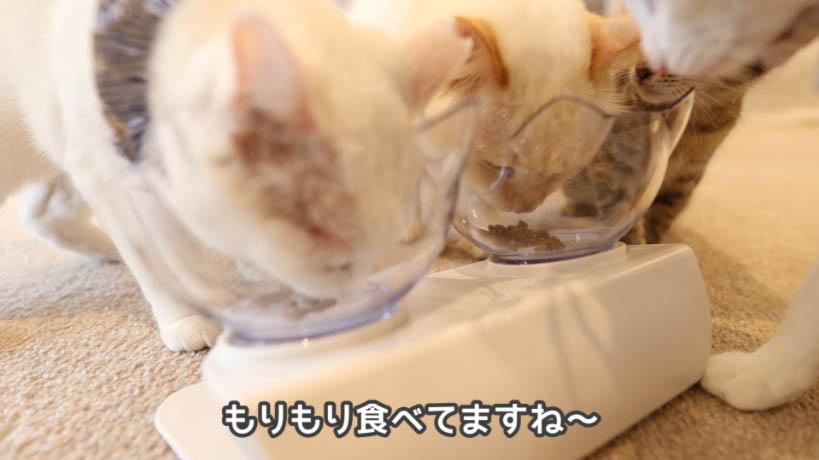 モンプチナチュラル天然お魚の贅沢をもりもり食べる猫たち