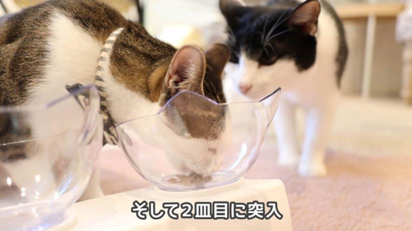 一匹しか食べないモンプチ クリスピーキッス シーフード