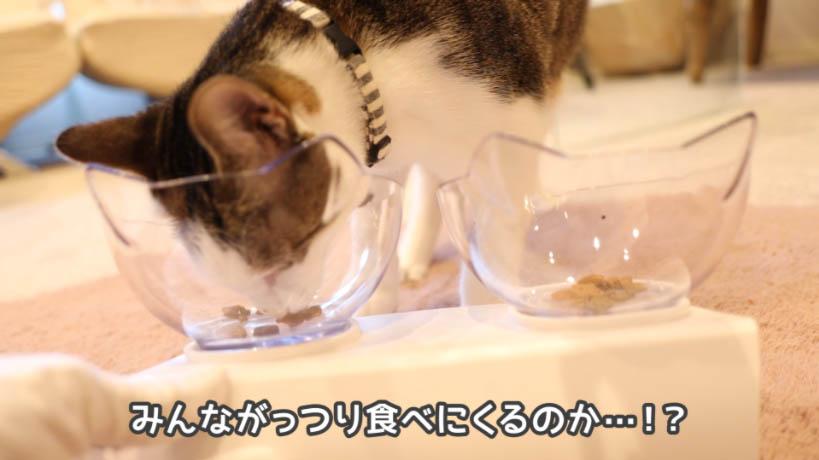 モンプチ クリスピーキッス シーフードの匂いを嗅ぐ猫