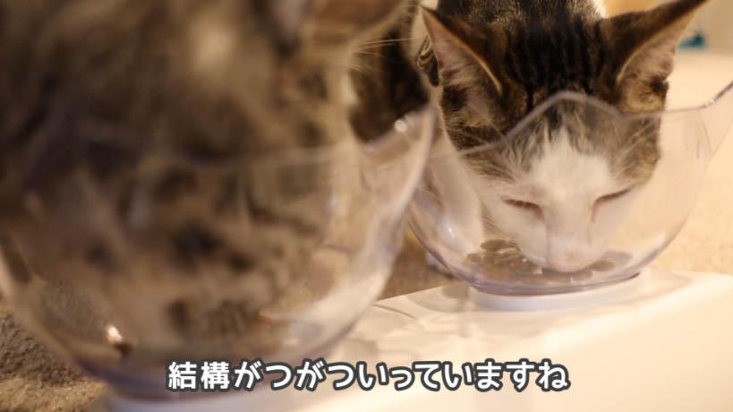 和の究み鰹だし香るみそ汁風味を食べる猫たち