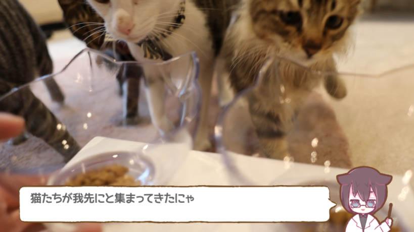 miawmiaw(ミャウミャウ)まぐろ味に猫たちが集まる