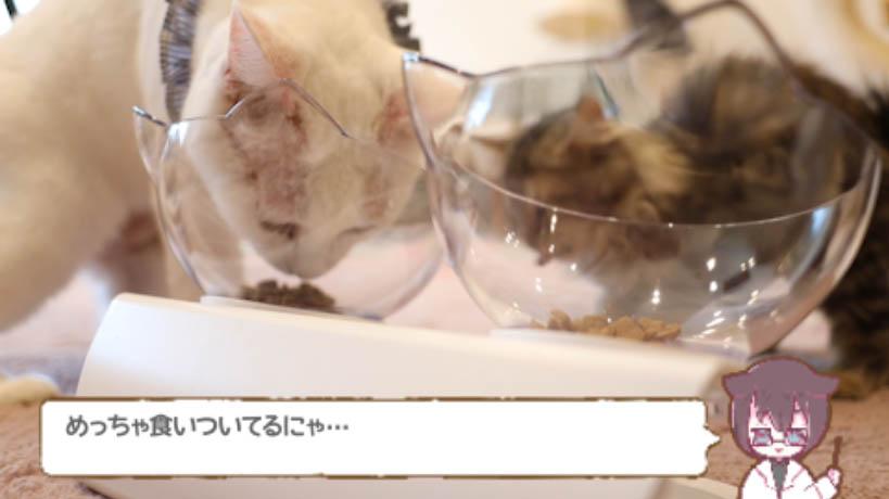 モンプチナチュラル白身魚とチキンの贅沢を食べる猫たち