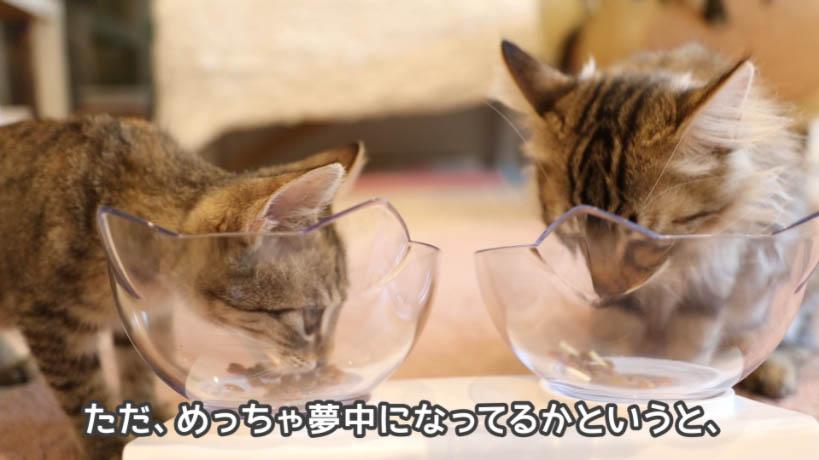 COMBO子ねこ用ミルクチップ添えは猫を夢中にさせない