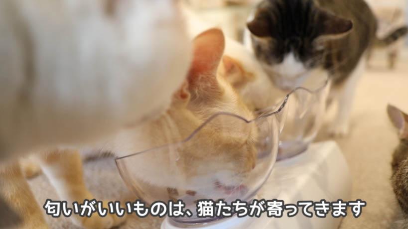 シーバDUO香りのまぐろと味わい鶏ささみ味は匂いがいい
