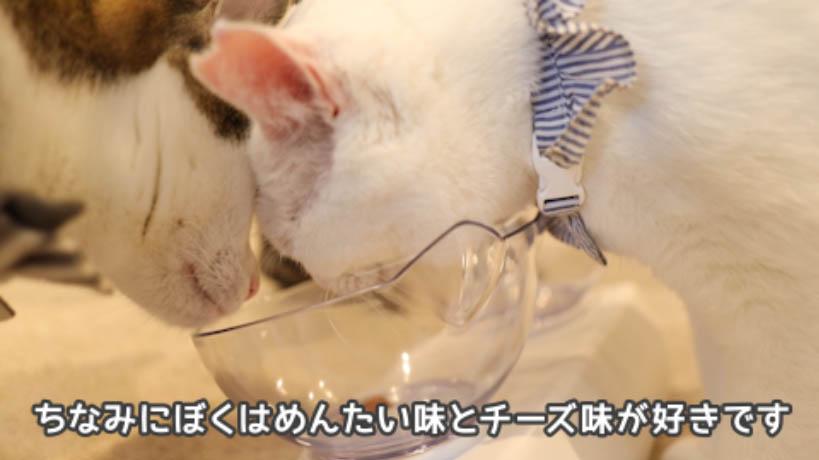猫がキャットフードを食べてる様子と雑談
