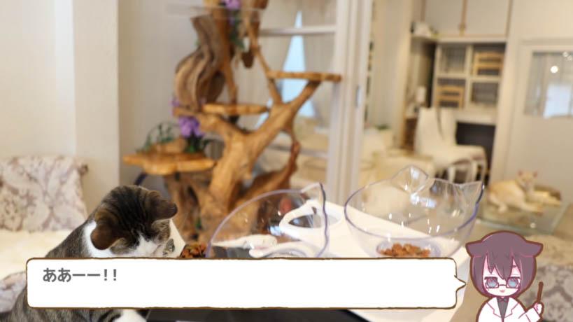 猫がお皿をテーブルから落とした