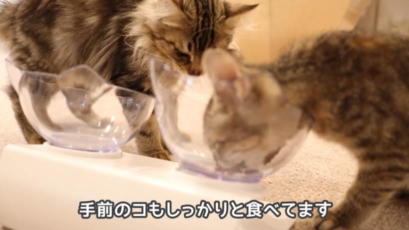 モンプチ子猫用5種のブレンドを食べる猫