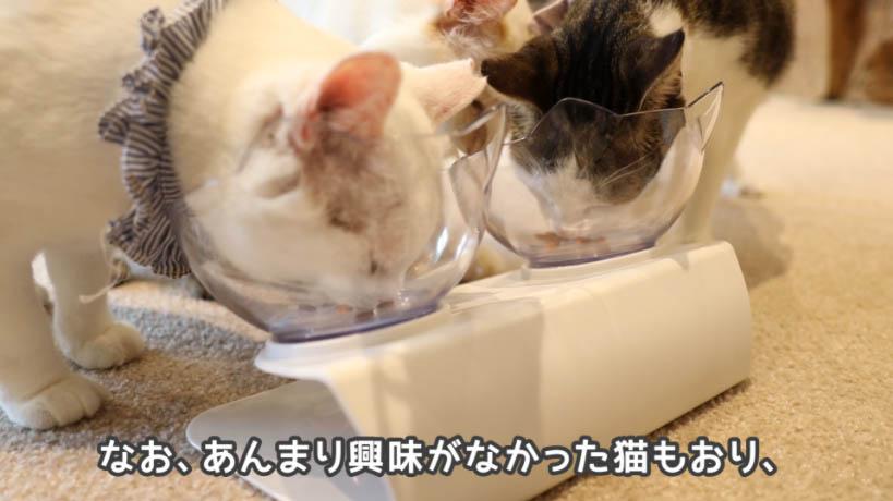 銀のスプーン三ツ星グルメお魚レシピを食べない猫もいる