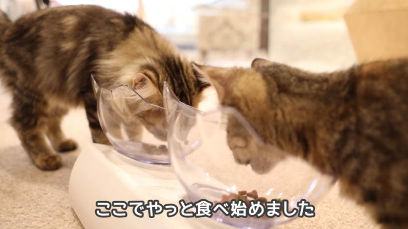 モンプチ子猫用5種のブレンドを2匹の子ネコが食べる