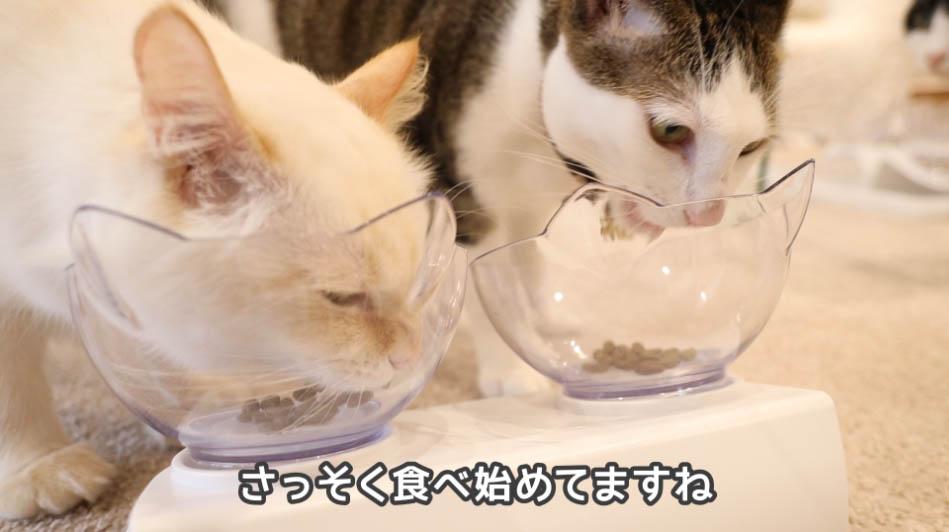 ニュートロ ナチュラルチョイス アダルトチキンを食べる猫たち