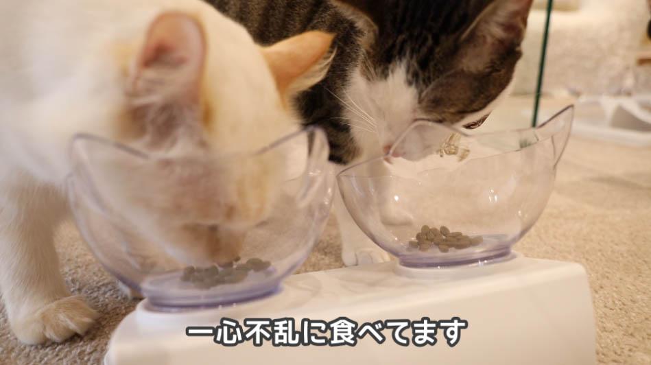 ニュートロ ナチュラルチョイス アダルトチキンを食べまくる猫たち