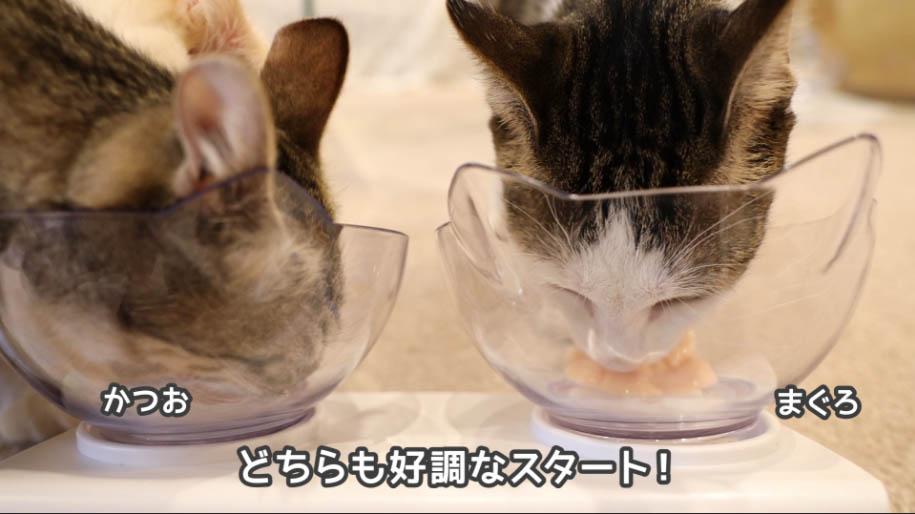 チャオちゅーるを食べる猫たち
