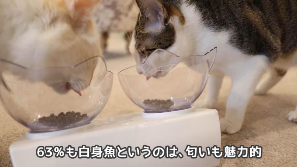 モグニャン・キャットフードを食べ続ける猫たち