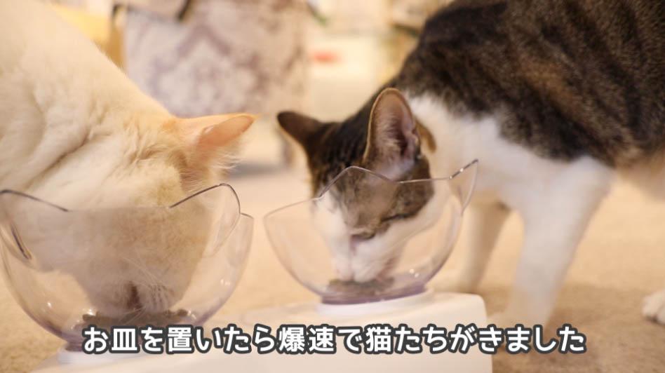 モグニャン・キャットフードを食べる猫たち