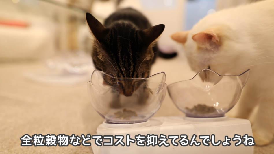 ニュートロ ナチュラルチョイス アダルトターキーの様子を見る猫たち